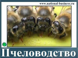 бизнес на пчеловодстве